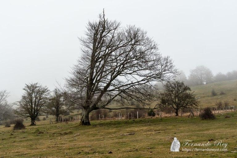 El árbol de la tormenta